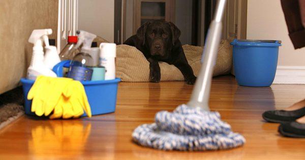 شركه تنظيف شقق بدبي