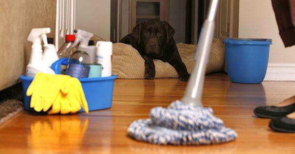 شركة لتنظيف الشقق بالشارقة