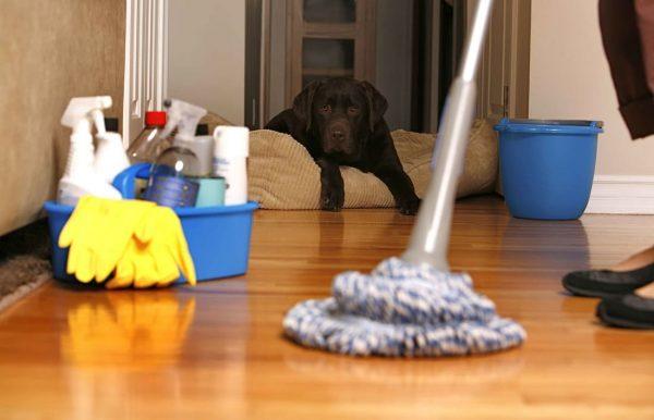 شركه تنظيف المنازل المتخصصه
