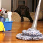 شركات لتنظيف البيوت بالامارات